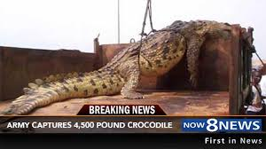 gigantic crocodile